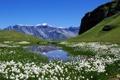 Картинка Австрия, белое, поле, озеро, цветы