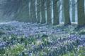 Картинка поле, деревья, цветы, ветки, природа, весна, крокусы