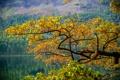 Картинка листья, осень, деревья, склон, горы, озеро, ветка