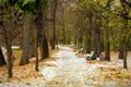 Картинка осень, снег, пейзаж, парк, октябрь, аллея, первый снег