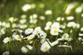 Картинка поле, лето, ромашки