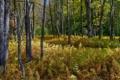 Картинка лес, деревья, природа, папоротник