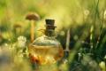 Картинка сосуд, отражение, трава, зелье
