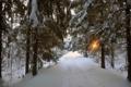 Картинка деревья, дорога, фото, природа, снег, зима