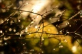 Картинка капли, макро, свет, блики, весна, после дождя, почки