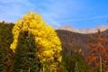 Картинка листья, лес, осень, деревья, горы, пейзаж