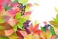 Картинка осень, листья, ягоды, яркость