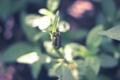 Картинка макро, гусеница, насекомое