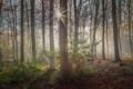 Картинка лес, лучи, деревья, природа