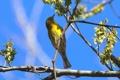 Картинка птица, ветка, небо, дерево