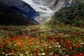 Картинка поле, цветы, скалы, маки, ромашки