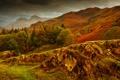 Картинка осень, трава, горы, камни, склон