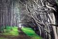 Картинка природа, пейзаж, деревья, дорога