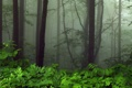 Картинка зелень, деревья, туман, листва, Лес