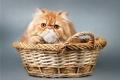 Картинка корзина, киса, kitty, basket