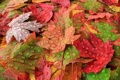 Картинка осень, листья, макро, роса, краски
