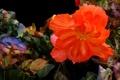 Картинка цветок, линии, природа, лепестки, штрих