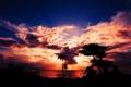 Картинка Вечер, Море, HDR, Закат, Океан, Красота, Пальма