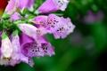 Картинка цветок, макро, розовый, ветка
