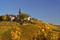 Картинка осень, небо, башня, дома, холм, виноградник