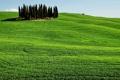 Картинка зелень, небо, деревья, поля