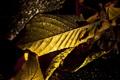 Картинка осень, листья, капли, свет, фото, макросъемка, ракурс