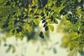 Картинка зелень, листья, макро, ветки, природа, фон, ветви