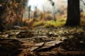 Картинка осень, лес, листья, макро, природа