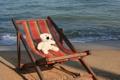 Картинка море, настроение, отдых, игрушка, мишка, шезлонг, Тайланд