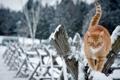 Картинка зима, кошка, забор