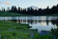 Картинка деревья, цветы, гора, Washington, Mount Rainier National Park, Mount Rainier, Tipsoo Lake