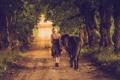 Картинка дорога, девушка, настроение, конь