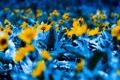 Картинка цветы, природа, растения, фотографии, сады