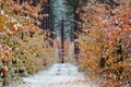 Картинка лес, осень, Канада, деревья, дорога, снег, Онтарио