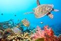 Картинка рыбки, обои, черепаха, водный мир