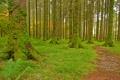 Картинка лес, трава, деревья, мох, дорожка, тропинка