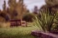 Картинка зелень, лето, трава, растение