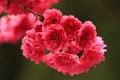 Картинка весна, ветка, цветы