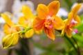 Картинка макро, природа, растение, ветка, лепестки, орхидея