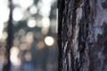 Картинка лес, природа, дерево, кора
