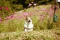 Картинка лето, друг, собака, прогулка