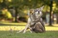 Картинка природа, фон, Coyote