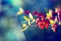 Картинка листья, цвета, природа, ягоды, фон, обои, яркие