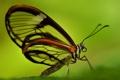 Картинка бабочка, крылья, насекомое, мотылек