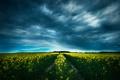 Картинка поле, облака, цветы, путь, горизонт