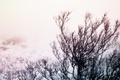 Картинка снег, dream production, дерево