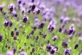 Картинка поле, цветы, фото, боке
