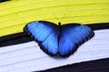 Картинка полосы, бабочка, насекомое, синяя