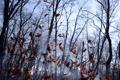 Картинка осень, лес, листья, деревья, ветки, природа