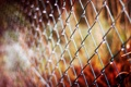 Картинка осень, макро, сетка, забор, ограда, размытость, металлическая